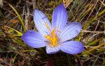 Природа, растения и животные крыма | фото, название и описание