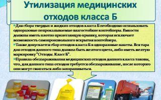 Все что нужно знать для утилизации биологических отходов по правилам