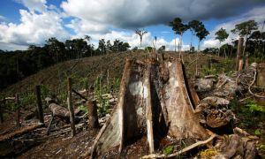 Вырубка тропических лесов. проблема вырубки тропических лесов