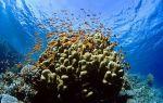 Ученые исследуют коралловые рифы