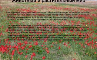 Природа калмыкии – описание и особенности растений и животных республики