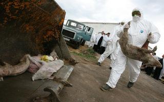 Правильная утилизация умерших животных