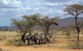 Национальные парки и заповедники африки – серенгети, нгоронгоро, бвинди