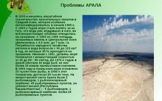 Экологические проблемы аральского моря: с чем связано высызание