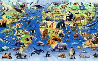 Фауна россии и мира – представители и виды животных земли