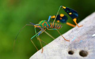 Животные влажных тропических лесов африки и амазонки – птицы и насекомые