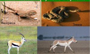 Животные пустыни и полупустыни россии и всего мира