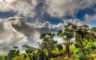 Влажные тропические леса африки и америки – виды, климат, проблемы и природа