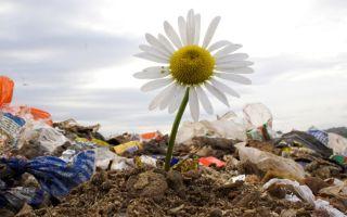 Экологические проблемы растений