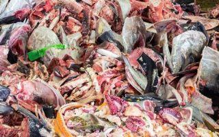 Эффективная утилизация и переработка рыбных отходов