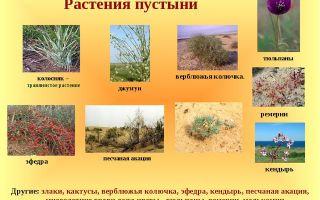 Растения пустынь и полупустынь: какие растения обитают в пустыне?