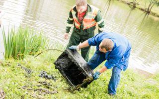 Папоротник очищает от нефти водоемы