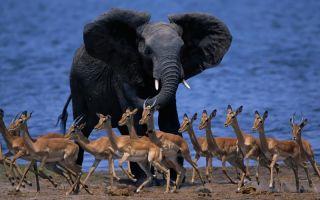 Животные в африке – интересные виды животных африки