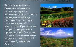 Природа северного кавказа с фото и описанием | животные и растения северного кавказа