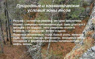 Природная зона лесов россии | климатические зоны лесов