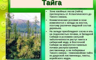 Хвойный лес россии и тайги – природные зоны, деревья, климат и особенности