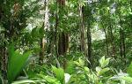 Растения влажных тропических лесов африки и южной америки