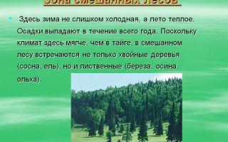 Смешанные леса россии и мира – климат, зона тайги, природная зона, виды