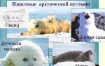 Животные  арктических пустынь | какие птицы обитают в арктической пустынях?