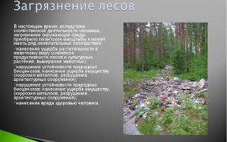 Загрязнение лесов человеком – проблема, источники и последствия загрязнения лесов