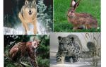 Природа, животные и растения татарстана | фото с названиями и описанием
