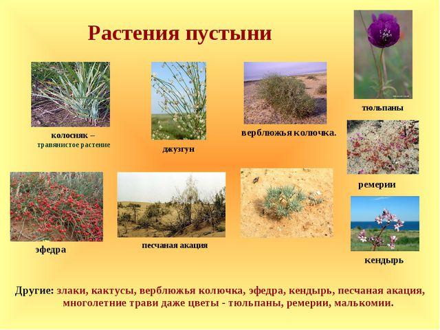 Растения степей и полупустынь картинки