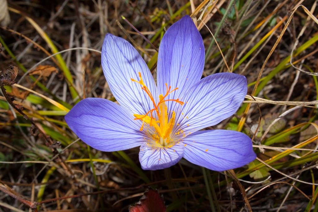 Крымские растения фото и названия